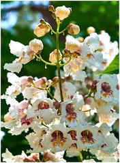 DSCF0155 (DrOpMaN®) Tags: korhankumral fujifilm fujinonxc1650mmf3556ois flowersplants flower darktable captureoneprofujifilm outdoor