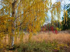 Fall colors (Snap Man) Tags: colorado denver denverbotanicgardens fallcolors