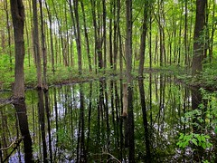 Forest Reflections (mswan777) Tags: tree forest wood landscape water reflection leaf plant green rain wet stevensville michigan apple iphone iphoneography mobile hike quiet scenic