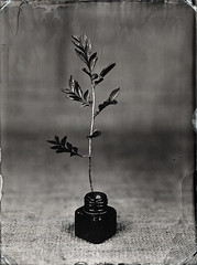 Tintafa (Nagy Krisztian) Tags: collodion 18x24cm alumitype