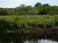 Flourishing (Phil Gayton) Tags: water meadow plant undergrowth tree sky cloud snipe island river dart totnes devon uk