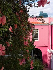 Bo-Kaap (Toni Kaarttinen) Tags: southafrica africa cape capetown travel travelling holiday wanderlust westerncape bokaap bo kaap architecture color colors colour colours paint architectureporn historical capemalay pink flowers