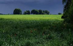 Après la pluie, avant l'orage! (renécarrère) Tags: plateaudesaclay fermedorsigny champ cultures lumière cieldorage coquelicots