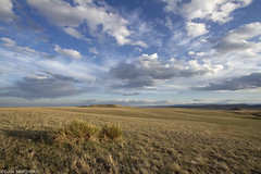 Cathy Fromme Prairie Natural Area (Evan Barrientos Photography) Tags: fortcollins larimercounty colorado unitedstates northamerica places cathyfrommeprairienaturalarea prairies grasslands habitats landscapes nature shortgrassprairie