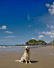 The mouse and the lion (rock) (j.r._photos) Tags: dog portrait beach holiday