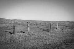 Open Field (Tammy Strot) Tags: blackandwhite blackandwhitephotography bw bwphotography nikon nikonusa nikonphotography fence fencephotography prairie feild nature naturephotography outdoor outdoorphotography outside outsidephotography