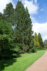 MRP_1870 (preedyphotos) Tags: westonbirt arboretum trees flowers blooming branches bark shapes outside woodland view blossom old oldarboretum martinpreedy canon eos1dx june 2019 june2019