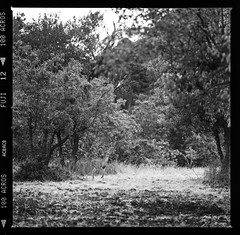 Deer (Graham Gibson) Tags: hasselblad 503cx 500 series v system film medium format 120 6x6 fuji fujifilm acros 100 bw black white
