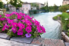 borghetto #1 (athanecon) Tags: borghetto italy river mincio pontevisconteo veneto italia peschieradelgarda garda gardalake lagogarda fiume rivo dusk tramonto sera campagna campagnaitaliana