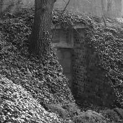 1146 (a.pierre4840) Tags: olympus omd em10 micro43 cmount schneider kreuznach xenon 25mm f095 bw blackandwhite noiretblanc 11 squareformat atmospheric abandoned derelict decay ruined dorset england