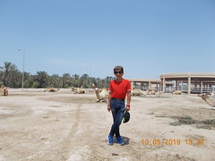royal camel farm bahrain 513 2019 (9) (victory one) Tags: royal camel bahrain 巴林 阿拉伯半島