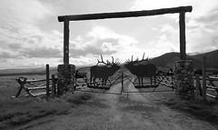 Ranch Gates - Elk Refuge BW (Don Thoreby) Tags: grandtetons wyoming tetonnationalpark tetonrange grandtetonsranch homestead rangeland sagebrush jacksonhole elkrefuge historicalranch luxuryranch metalsculpture metalsculpturegates ranchgates elkgates