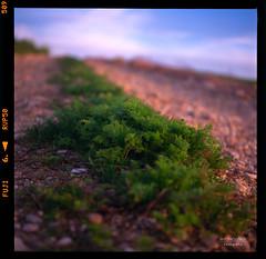 Scan 1 (Champy88) Tags: drumscanner slide paisaje analog diapositiva film landscape color mediumformat 120film filmphotography filmisnotdead 6x6 6x6only drumscan scanviewscanmate5000 scanmate5000 formatomedio squareformat yashicamatlm yashinon80f35 fujichromevelvia50rvp velvia50