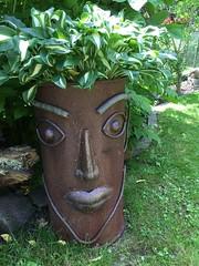 Mal ein anderer Kopf... (Carl-Ernst Stahnke) Tags: topf sommerfeld karstenmiller gesicht pflanzen