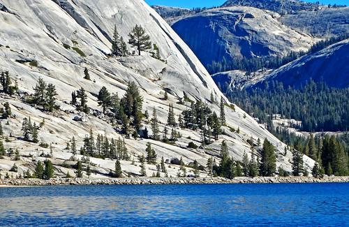 Life on the Rocks, Tenaya Lake,  Yosemite NP 2018