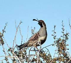 06112019000005033 (Lake Worth) Tags: bird birds nature reptile reptiles rabbit
