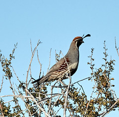 06112019000005039 (Lake Worth) Tags: bird birds nature reptile reptiles rabbit