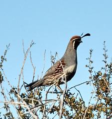 06112019000005037 (Lake Worth) Tags: bird birds nature reptile reptiles rabbit