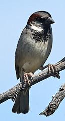 06112019000004938 (Lake Worth) Tags: bird birds nature reptile reptiles rabbit