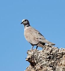06112019000004935 (Lake Worth) Tags: bird birds nature reptile reptiles rabbit