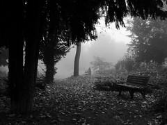 Schwarz-Weiß-Impressionen (Helmut44) Tags: deutschland germany sachsenanhalt friedhof frühnebel sw cemetery bank baum tree nebel einfarbig