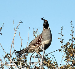 06112019000005034 (Lake Worth) Tags: bird birds nature reptile reptiles rabbit