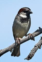 06112019000004940 (Lake Worth) Tags: bird birds nature reptile reptiles rabbit