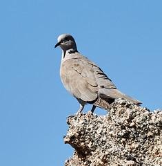 06112019000004934 (Lake Worth) Tags: bird birds nature reptile reptiles rabbit