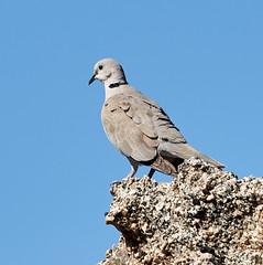 06112019000004933 (Lake Worth) Tags: bird birds nature reptile reptiles rabbit