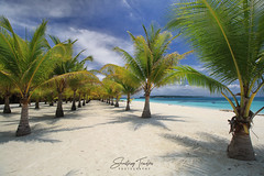 Sandy Paradise (engrjpleo) Tags: portavega beach dimasalang masbate philippines southeastasia palms tree tropical landscape seascape sea water waterscape outdoor seaside shore coast