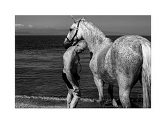 Horses at sea (Perilouc) Tags: balkancollective burnmyeye ourstreets inpublicsp inpubliccollective hartcollective intercollective leica leicacamera leicam leicaphoto leicaphotography blackwhite blackandwhite monochrome mono monotone bw bnwaddicted bnwcaptures bnwphotography bnwsociety fotoblackwhite littledoglaughednoiret