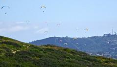 DSC08448 (Hiker Bob) Tags: 20190420 beachtrail paragliders torreypines