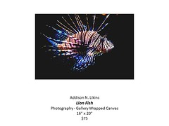 "Lion Fish • <a style=""font-size:0.8em;"" href=""http://www.flickr.com/photos/124378531@N04/48044845198/"" target=""_blank"">View on Flickr</a>"