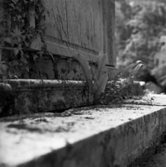 Life from the dead (4foot2) Tags: churchofstnicholascharlwoodsurrey churchofstnicholas charlwood surrey church churchyard tomb graveyard graves fern plant analogue film filmphotography 120film mediumformat hasselbladski kiev kiev88cm 88cm киев88cm ukrainiancamera bw blackandwhite monochrome mono rolleiretro rolleiretro80s rodinal 80s retro80s carlzeissjenabiometar80mm28 carl carlzeissjena zeiss jena biometar80mm28 biometar 80mm f28 28 standdevelop 2019 fourfoottwo 4foot2 4foot2flickr 4foot2photostream