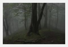 (merkanani) Tags: landscape trees fog forest field spring minimal morning darkness sadness