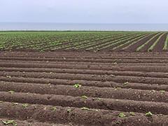 Photo of Potato farms on the North Sea cliffs
