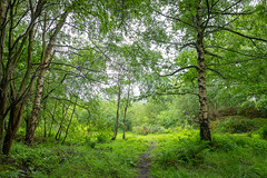20190611_Cuttle Pool Lane (Damien Walmsley) Tags: cuttlepool warwickshire warwickshirewildlifetrust naturereserve knowle
