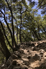 Went to #Yosemite over the #weekend #absolutely #beautiful it was in the high 70's 👌 (Σταύρος) Tags: upperyosemitefallstrail sierranevada centralcalifornia stanislausnationalforrest upperfalls exercise cardio hiking hikingtrail june2019 nationalpark yosemitepark yosemitenationalpark yosemite weekend absolutely beautiful kalifornien californië kalifornia καλιφόρνια カリフォルニア州 캘리포니아 주 cali californie california northerncalifornia カリフォルニア 加州 калифорния แคลิฟอร์เนีย norcal كاليفورنيا park trees flora fauna hike workout walking cardioworkout