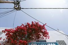 Greek scenes (marin.tomic) Tags: greece greek cyclades mykonos aegean mediterranean travel fujifilm xt2 flowers architecture europe summer holiday vacation