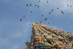 Madurai, India, City of Temples (Geraint Rowland Photography) Tags: art religion religiousart architecture temples hinfu wwwgeraintrowlandcouk colourful travelinindia indiantravel indianhistory indianculture madurai india cityoftemples birds lookingup awe wanderlust wandering wondering inspiration gettyimages gettyimagesindia canonindia wonderoftheworld pyramid triangle gearingrowlandinindia tamil tamilnadu photographytamilnadu