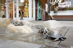 156/365 back-up turtles