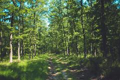 KRIS1374 (Chris.Heart) Tags: túra hiking hungary nature okt kéktúra