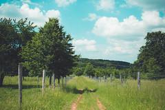 KRIS1507 (Chris.Heart) Tags: túra hiking hungary nature okt kéktúra