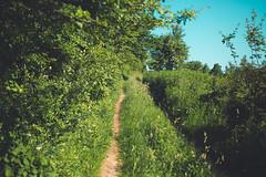 KRIS1329 (Chris.Heart) Tags: túra hiking hungary nature okt kéktúra