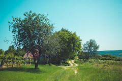 KRIS1175 (Chris.Heart) Tags: túra hiking okt nature hungary