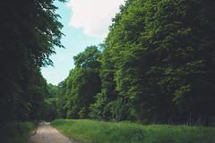 KRIS1538 (Chris.Heart) Tags: túra hiking hungary nature okt kéktúra