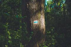 KRIS1583 (Chris.Heart) Tags: túra hiking nature okt hungary természet