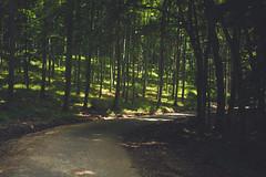 KRIS1678 (Chris.Heart) Tags: túra hiking nature okt hungary természet