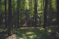 KRIS1622 (Chris.Heart) Tags: túra hiking nature okt hungary természet