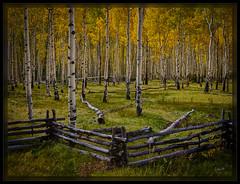 The Old Fence (cwaynefox) Tags: aspen aspensfall colorado openedition usa unitedstates gallery landscape scenic